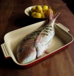 fishfinal2